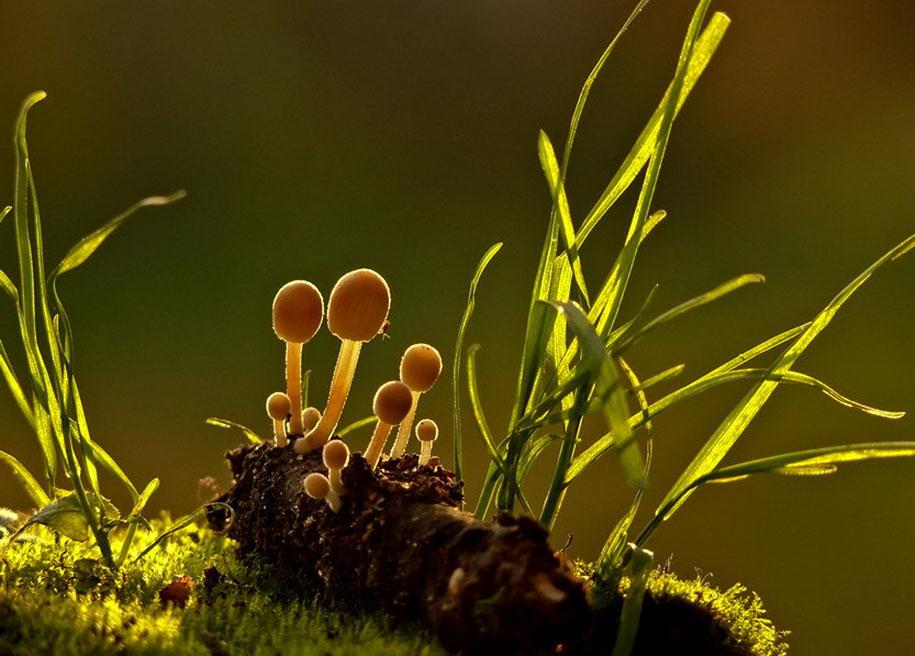 mushroom-nature-macro-photography-vyacheslav-mishchenko-22