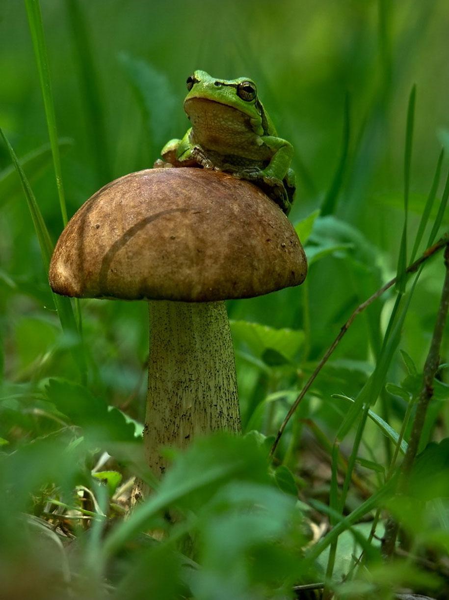 mushroom-nature-macro-photography-vyacheslav-mishchenko-25