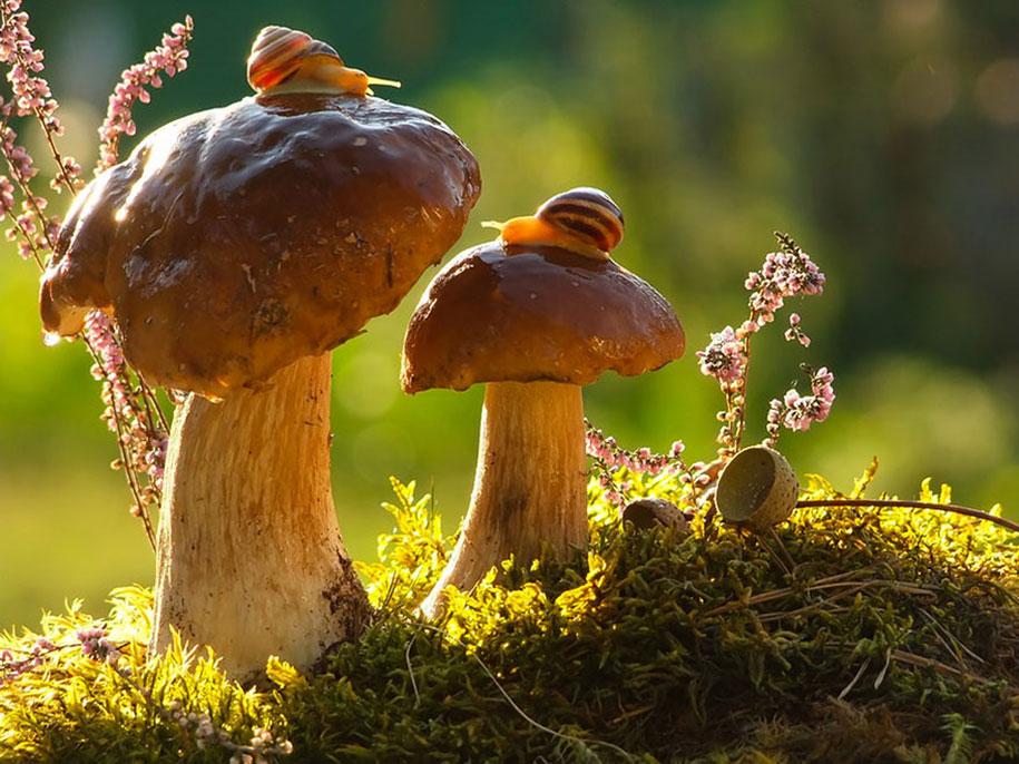 mushroom-nature-macro-photography-vyacheslav-mishchenko-26