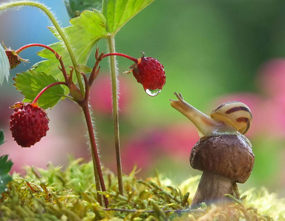 mushroom-nature-macro-photography-vyacheslav-mishchenko-27