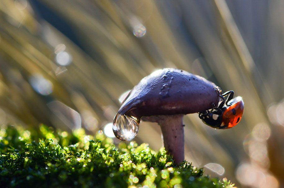 mushroom-nature-macro-photography-vyacheslav-mishchenko-4