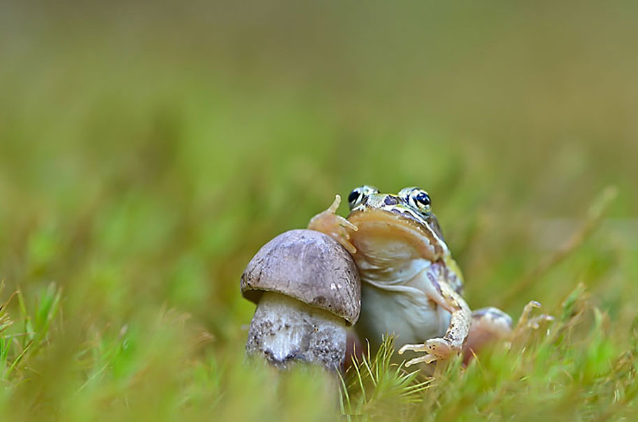 mushroom-nature-macro-photography-vyacheslav-mishchenko-5