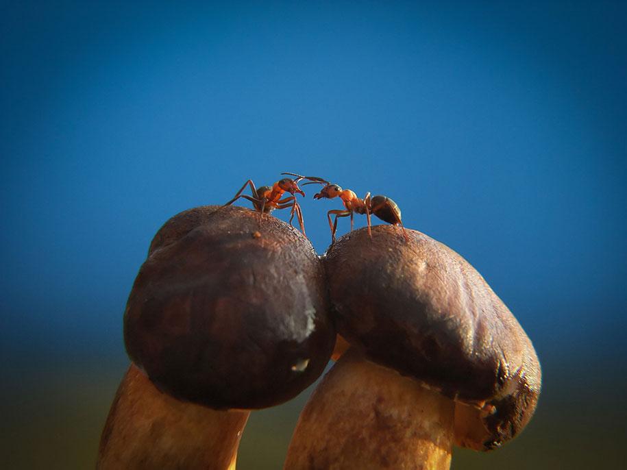 mushroom-nature-macro-photography-vyacheslav-mishchenko-6