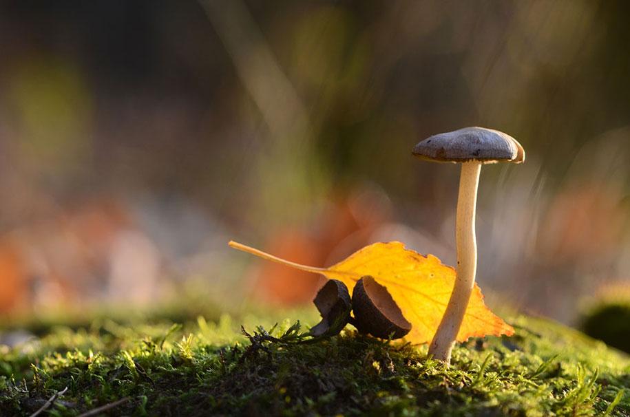 mushroom-nature-macro-photography-vyacheslav-mishchenko-7