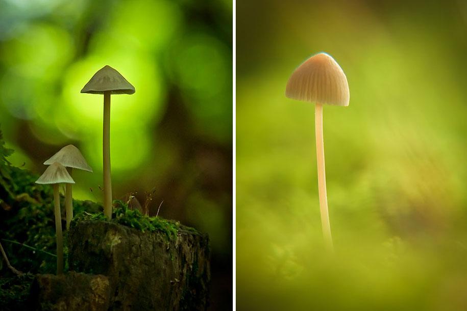 mushroom-nature-macro-photography-vyacheslav-mishchenko-9