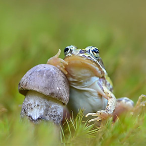 Ordinary Mushrooms In A Magical World By Vyacheslav Mishchenko