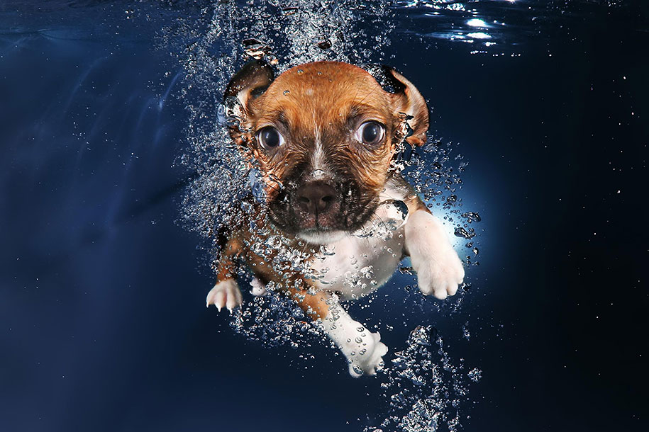 underwater-puppy-animal-photography-seth-casteel-1