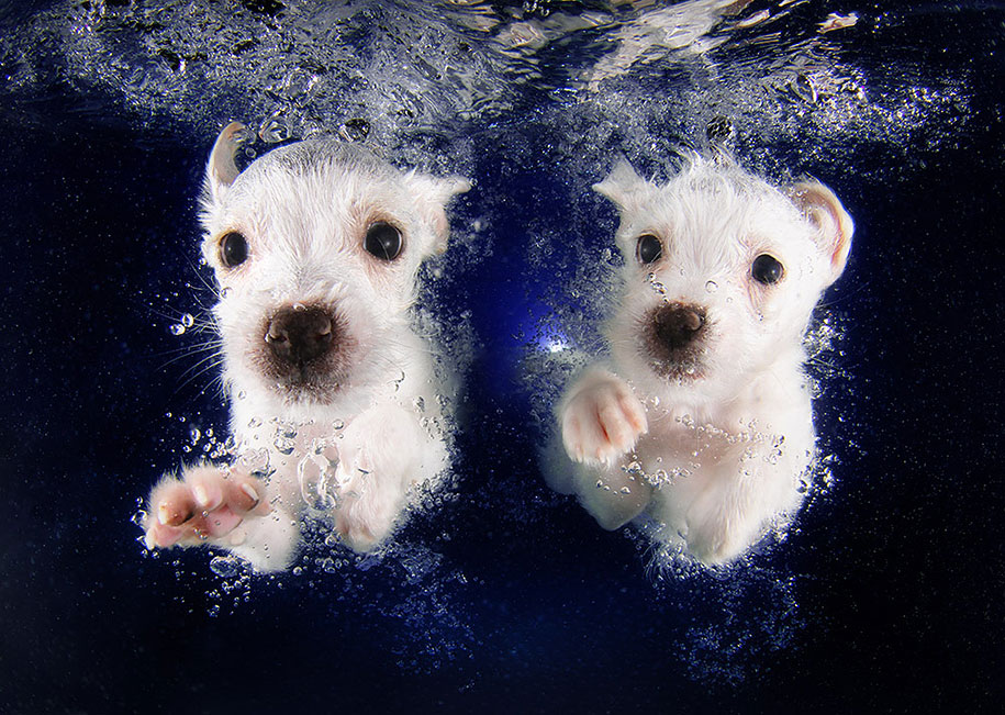 underwater-puppy-animal-photography-seth-casteel-10