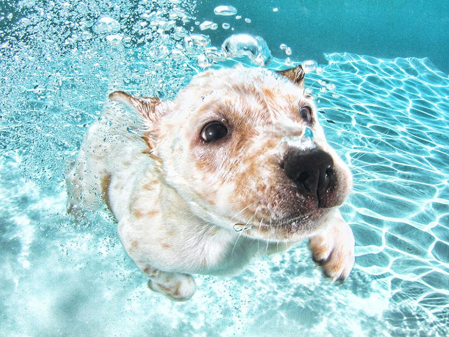 underwater-puppy-animal-photography-seth-casteel-2