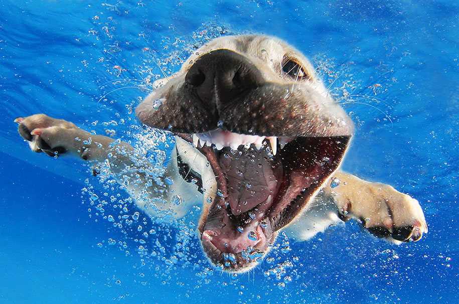 underwater-puppy-animal-photography-seth-casteel-3
