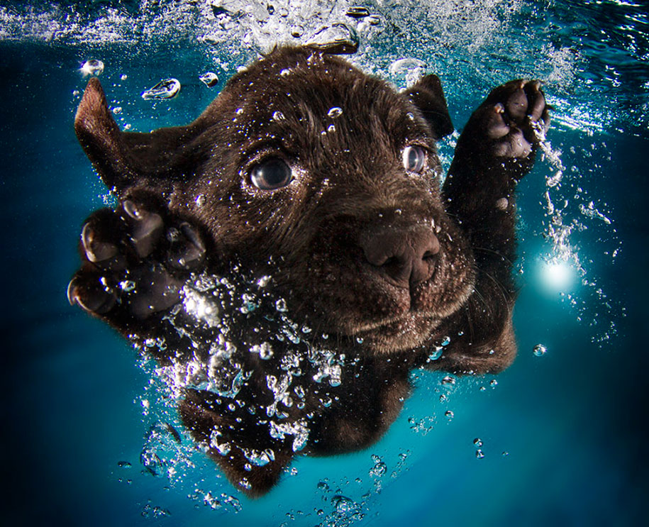 underwater-puppy-animal-photography-seth-casteel-6