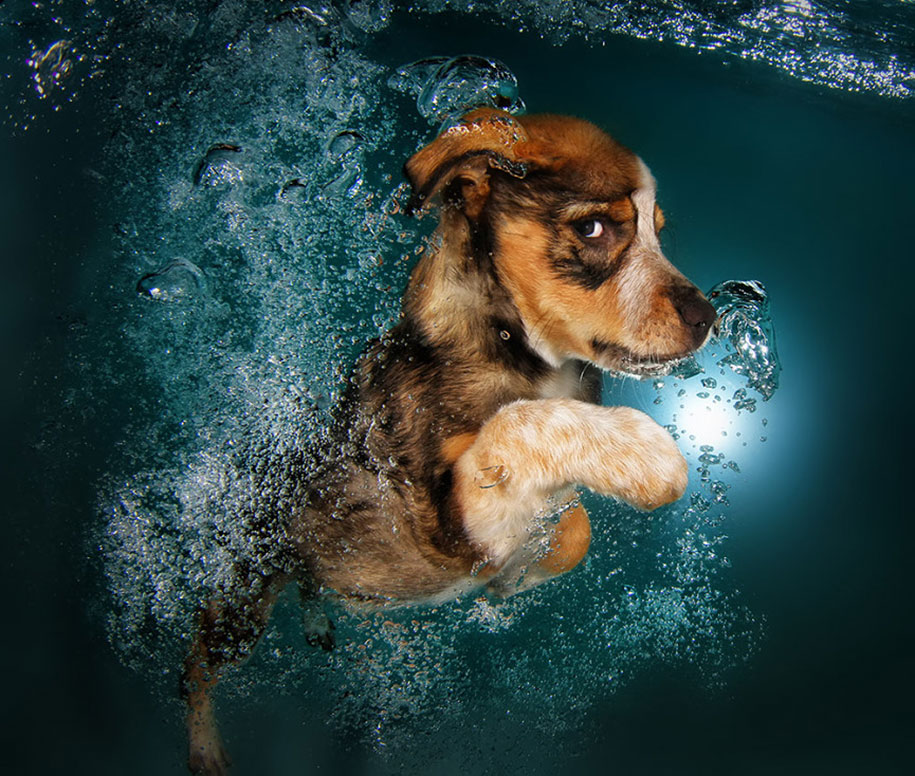 underwater-puppy-animal-photography-seth-casteel-7