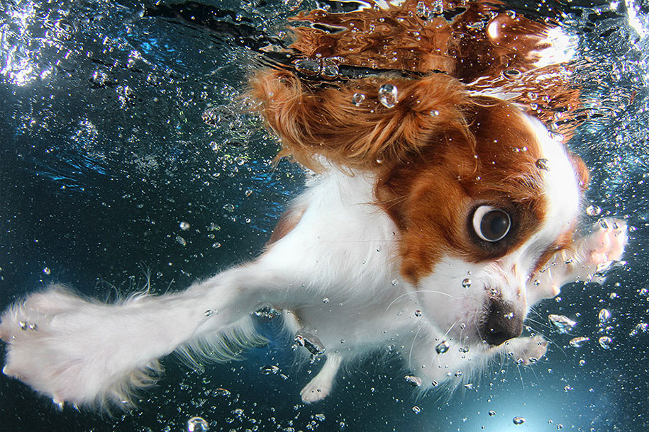underwater-puppy-animal-photography-seth-casteel-9