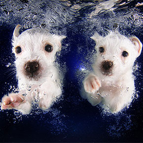 Underwater Puppies: New Photo Series By Seth Casteel