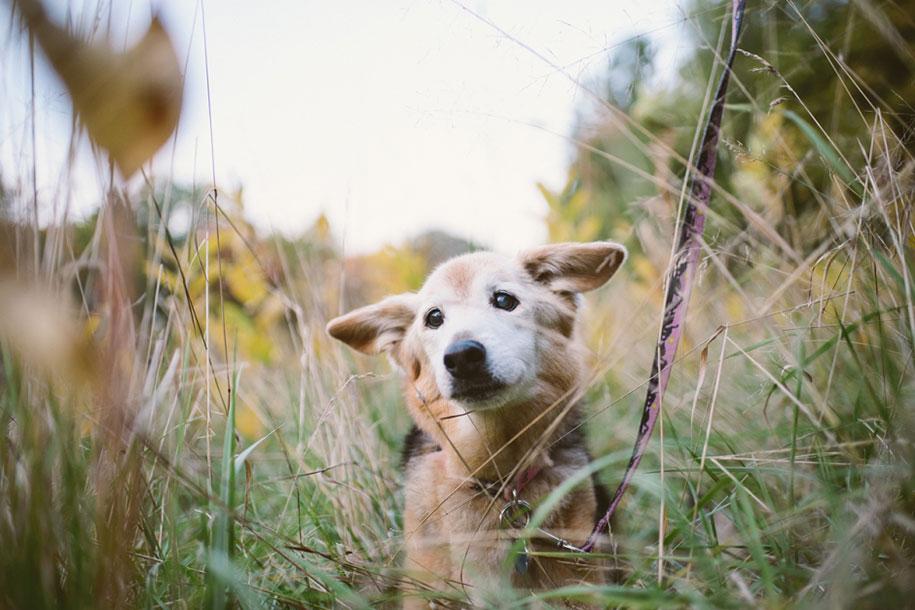 chubby-dog-memorial-photoshoot-maria-sharp-suzanne-price-16