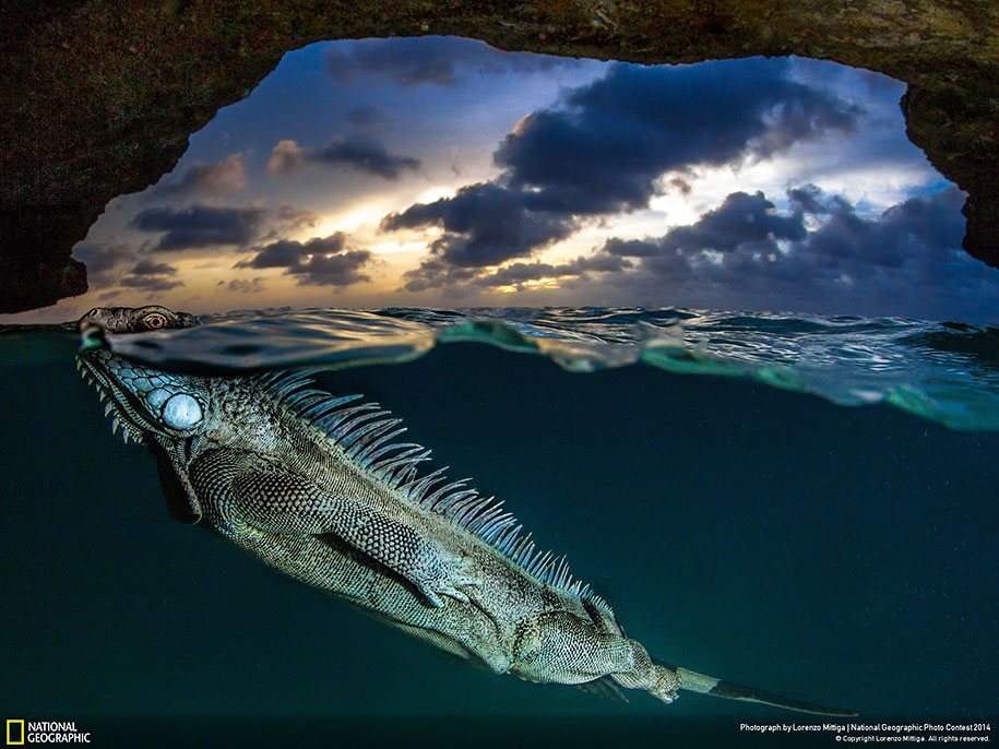 national-geographic-photo-contest-2014-entries-22