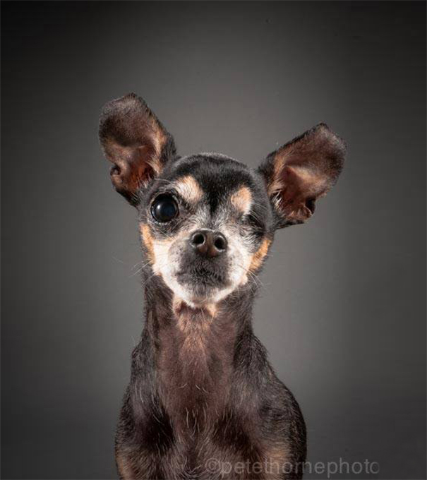 old-faithful-old-dog-portrait-photography-pete-thorne-1