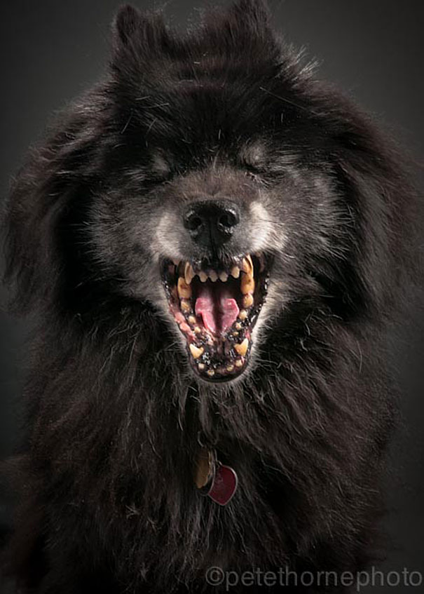 Old Faithful Dog Pictures