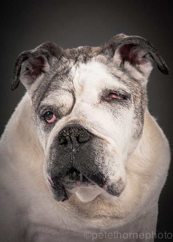 old-faithful-old-dog-portrait-photography-pete-thorne-2