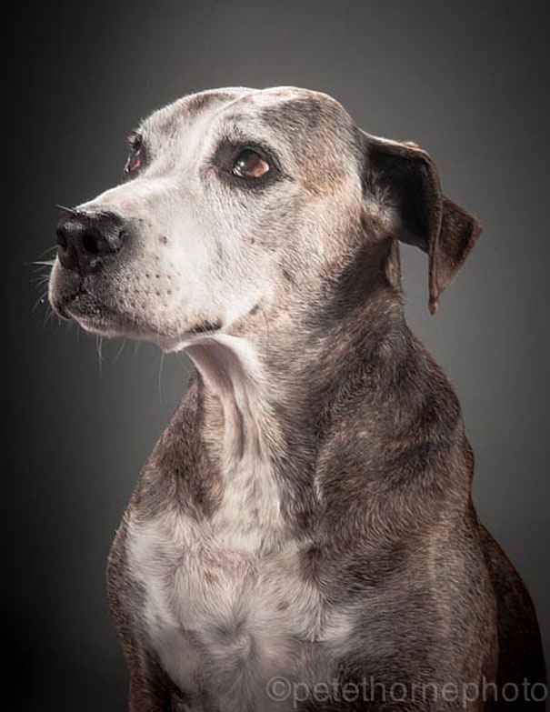 old-faithful-old-dog-portrait-photography-pete-thorne-6