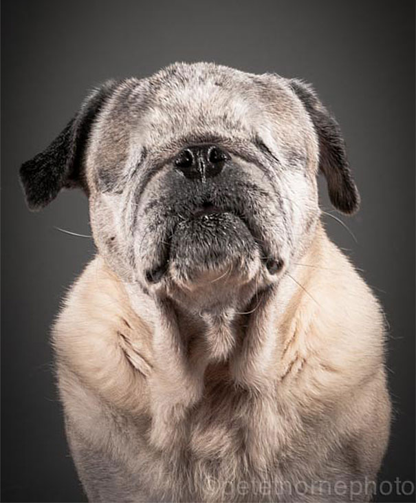 old-faithful-old-dog-portrait-photography-pete-thorne-7