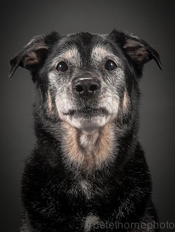 old-faithful-old-dog-portrait-photography-pete-thorne-9