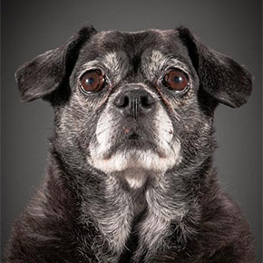 Photographer Takes Heartbreaking Portraits Of Really Old Dogs