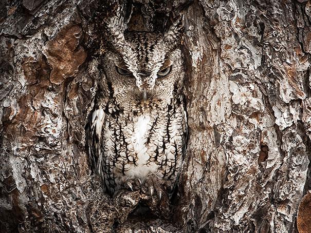 owls-comouflage-nature-photography-1