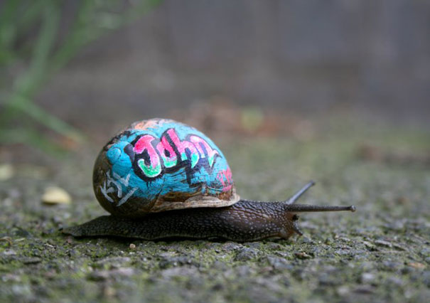 painted-snail-shell-art-4