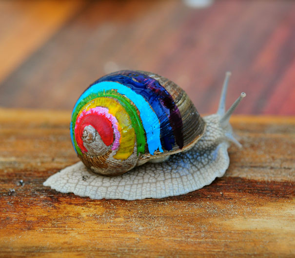 painted-snail-shell-art-7