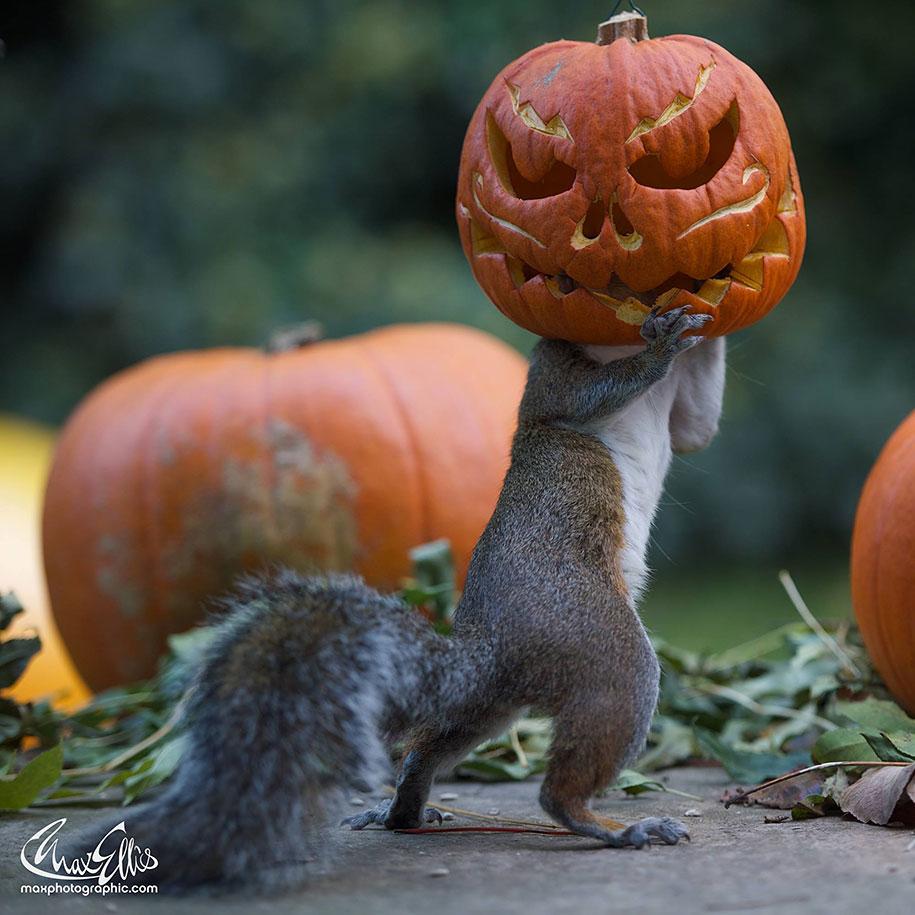 squirrel-pumpkin-funny-photography-max-ellis-3