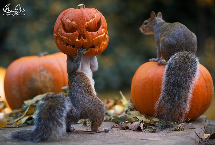 squirrel-pumpkin-funny-photography-max-ellis-6