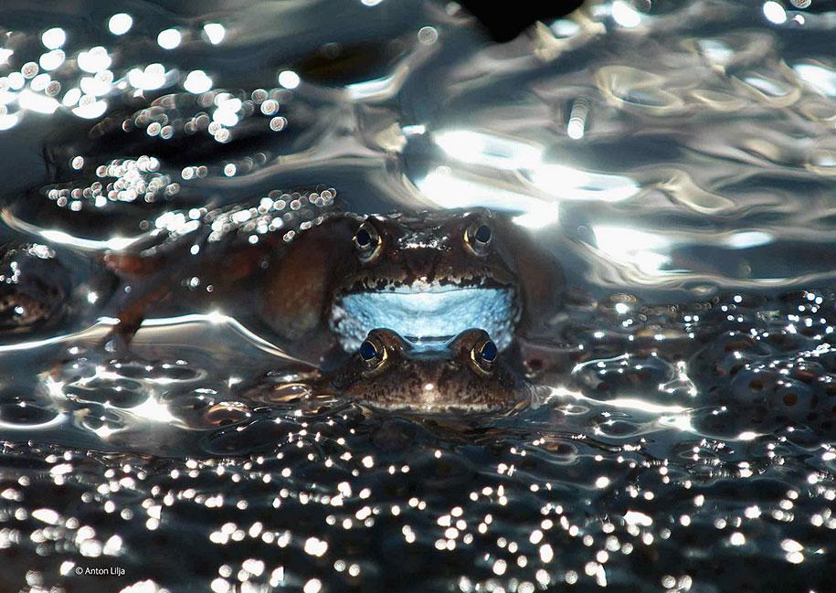 wildlife-photographer-of-the-year-2014-awards-15