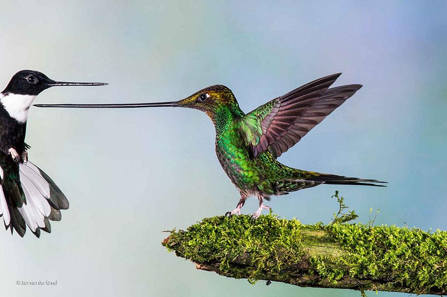 wildlife-photographer-of-the-year-2014-awards-16