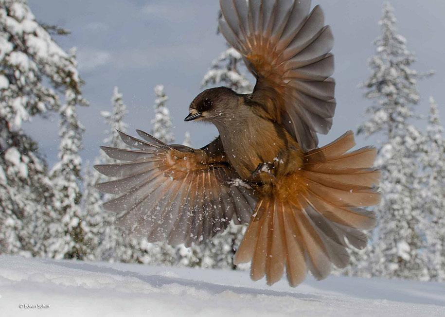 wildlife-photographer-of-the-year-2014-awards-17