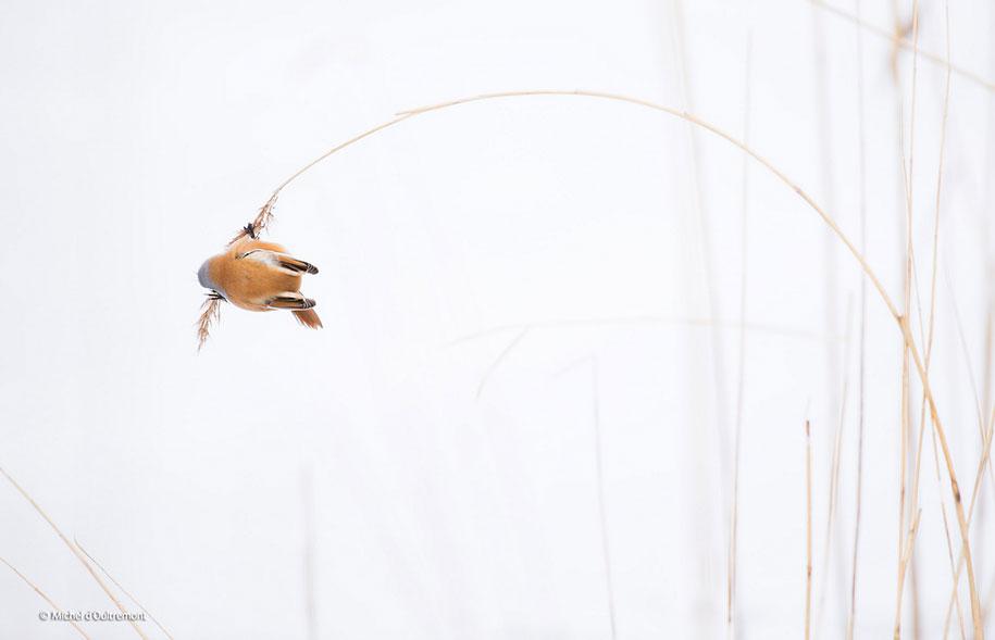 wildlife-photographer-of-the-year-2014-awards-21