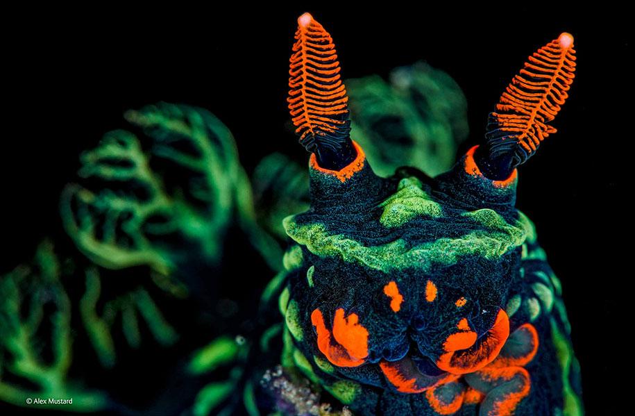 wildlife-photographer-of-the-year-2014-awards-24