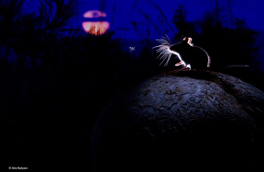 wildlife-photographer-of-the-year-2014-awards-3