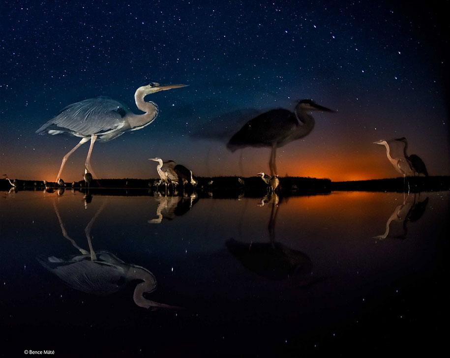 wildlife-photographer-of-the-year-2014-awards-4