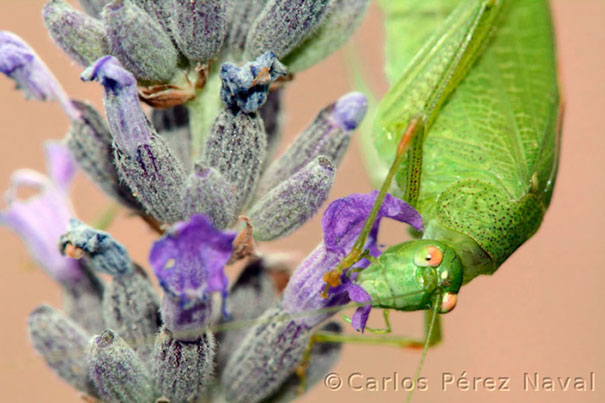 wildlife-photography-carlos-perez-naval-11