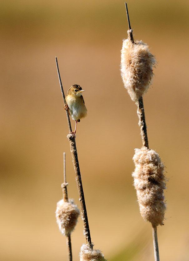 wildlife-photography-carlos-perez-naval-12