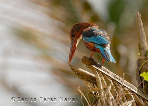 wildlife-photography-carlos-perez-naval-16