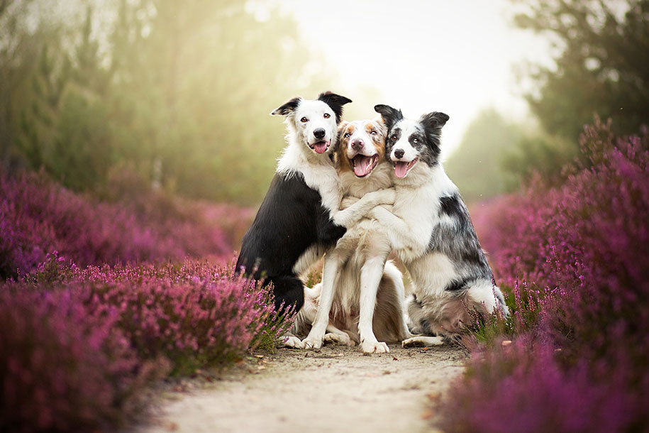 animals-dog-photography-alicja-zmyslowska-1