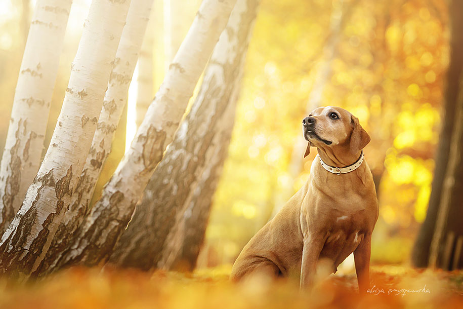 animals-dog-photography-alicja-zmyslowska-13