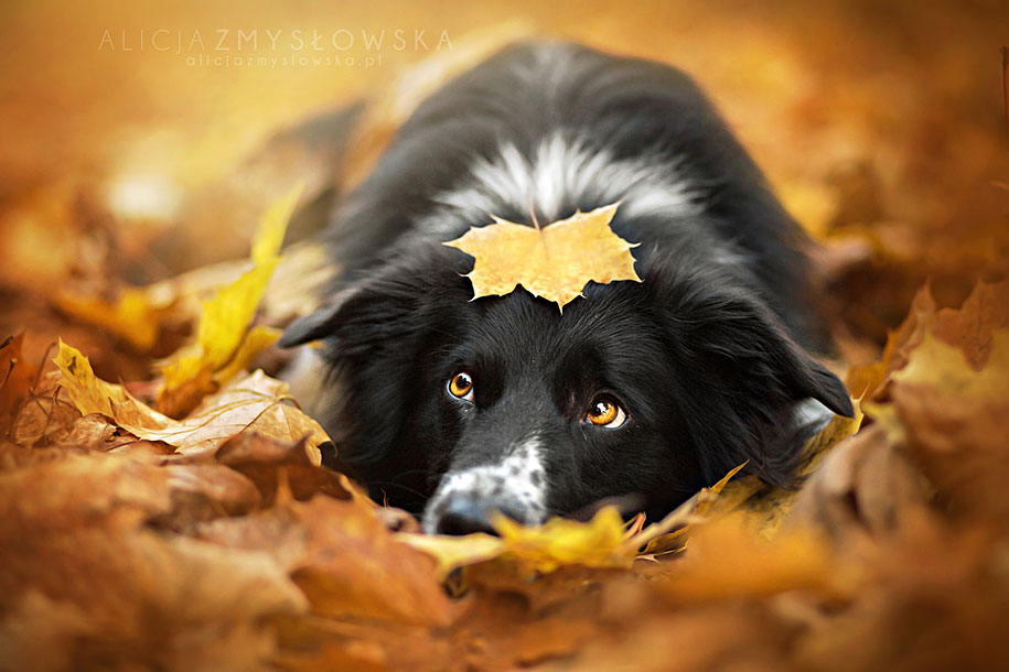 animals-dog-photography-alicja-zmyslowska-2