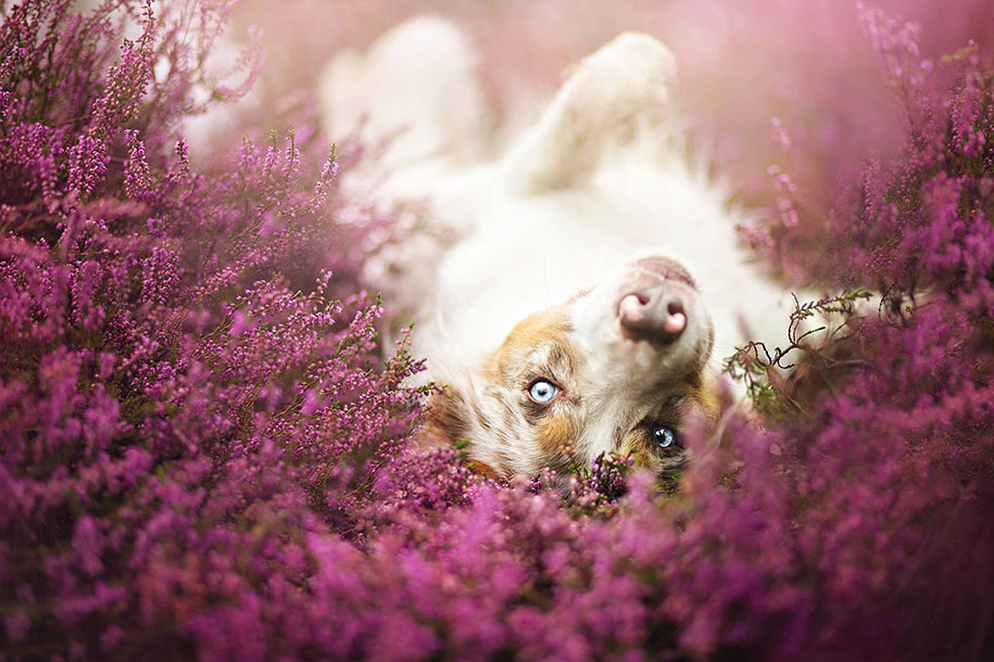 animals-dog-photography-alicja-zmyslowska-20