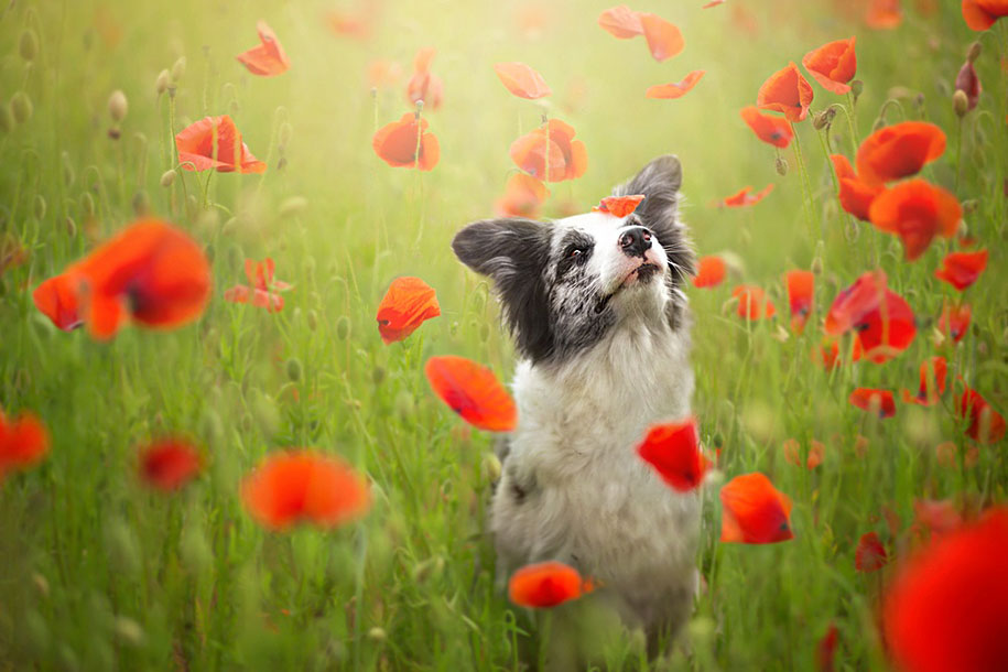 animals-dog-photography-alicja-zmyslowska-3