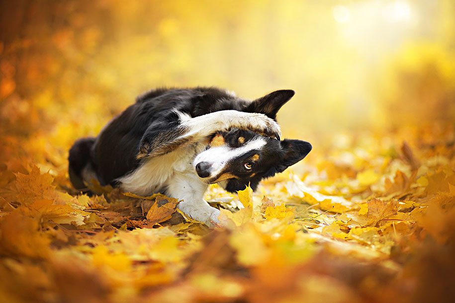 animals-dog-photography-alicja-zmyslowska-6