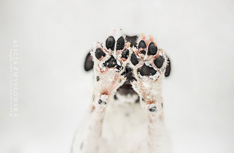 animals-dog-photography-alicja-zmyslowska-8