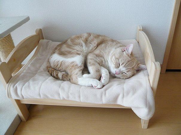 Duktig Anese Cat Bed Ikea 1